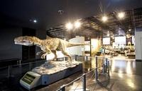 県立恐竜博物館の模型(勝山市) 実物大、鳴き声に度肝 ふくい音風景(6)