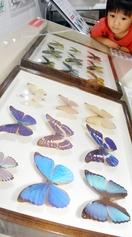 奇妙、巨大な世界の昆虫標本集結