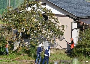 柿の木にいるクマを捕らえようとする福井県警福井署員ら=10月11日午後3時55分ごろ、福井県福井市荒木新保町