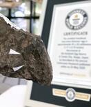 世界最小の卵化石、ギネス認定
