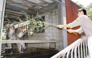 ササを使ってサルに餌をやる高校生=7日、福井市の足羽山公園遊園地