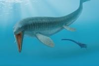 ティロサウルスの13m全身骨格化石に注目 福井県立恐竜博物館で7月16日から海竜展