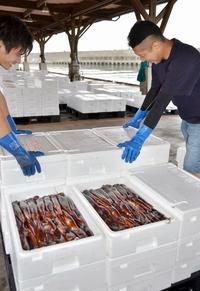 初夏の味スルメイカ9月も好漁の謎