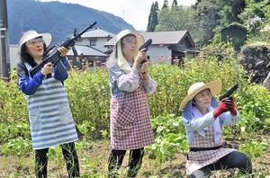 サルが出没する畑で目を光らせるモンキーバスターズの女性たち=8月20日、福井県福井市計石町