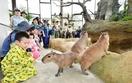足羽山動物園再開で親子連れ行列