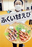 「ふくい甘えび」発信 県産ブランド化へ名称 県…