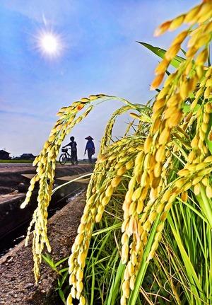 「立秋」も福井県内で厳しい暑さ