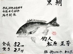 松原さんのチヌ魚拓