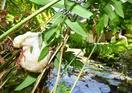 泡のゆりかご、新緑の庭園彩る