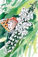 花の写真、はがき絵高橋さんら最優秀 越前市万葉菊…