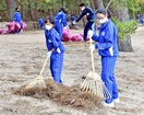 気比の松原を美しく 敦賀・松陵中160人松葉か…