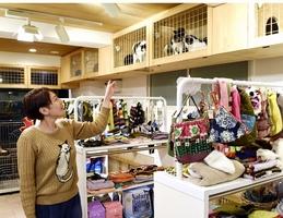 犬猫用の厳選したグッズやフードが並ぶ「ミグノンプラン」店内。キャットウオークでは保護された猫たちが遊んでいる=東京都渋谷区