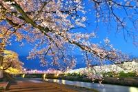 ふくい桜まつり2021、楽しみは夜