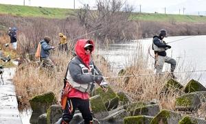 サクラマス釣りを楽しむ人たち。今季は釣果不振が続いている=2月1日、福井県福井市六日市町の九頭竜川