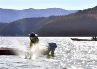 湖面たたけば、冬来る 若狭町で伝統漁