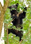 民家近くにクマ、住民から不安の声