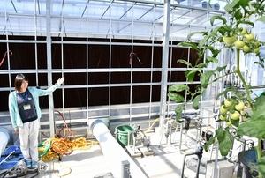 気化冷却でハウス内の温度を下げるパット(奥)=9月6日、福井県美浜町久々子の福井県園芸研究センター