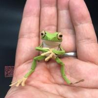 「はがしたダンボールでついついカエル作った…だって…お~いお茶のケースってカエルにしか見えないよね」制作&写真/ヤムシスワークス(@yamshis_works)