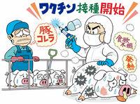 接種再開、豚に抵抗力 致死率高い伝染病対策 経済やわらかゼミ