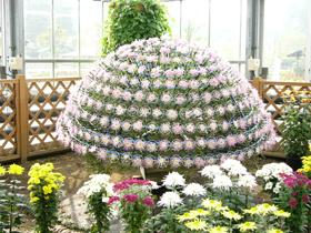 懸崖菊や千輪菊などの生産過程が見学可能 北陸最大の花時計も