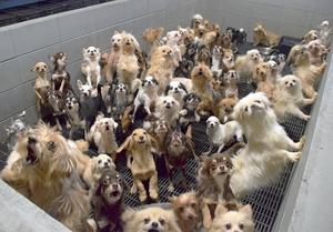ブロックで囲まれた「マス」に過密状態で飼育されていた犬たち=2017年12月、福井県坂井市内(県内動物愛護グループ提供)