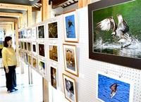 【作品展】越前加賀県境の館で「自然と生き物たち」写真展(福井新聞社後援)