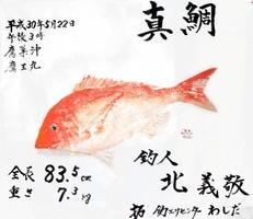 北さんのマダイ魚拓