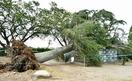 台風17号、学校や道で倒木被害