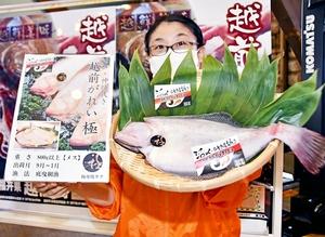 福井県のプレミアムブランド「極」として売り出される越前がれいの大型の雌=10月13日、福井県越前町大樟の同町漁協荷さばき所