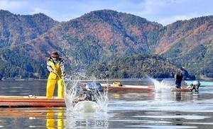 竹ざおで湖面をたたき、魚を網へ追い込む漁師たち=2日、福井県若狭町の三方湖