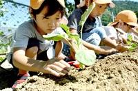 特産ブロッコリー育てて 鯖江市、幼稚園に苗贈る みんなで読もう