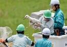 コウノトリ誤射、ひな人工飼育へ