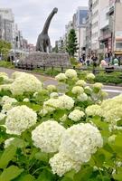 6月10日に梅雨入りが発表された福井県。JR福井駅西口広場ではアジサイが咲き誇り、モニュメントの恐竜が首を伸ばしてお花見しているかのよう=11日、福井県福井市