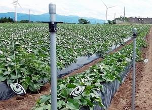 日本ダムが開発した「イノ用心」を設置した畑。イノシシ被害がなくなったという=福井県あわら市内(同社提供)
