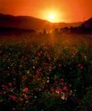 【写真の広場】10月の入賞作品 特選 「夕陽の…