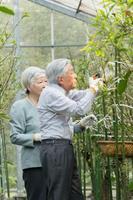 天蚕の繭を収穫される天皇、皇后両陛下=12日午後、皇居・野蚕室(宮内庁提供)