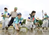 献上米 楽しく手植え 福井・上文殊 「お米送り」へ児童挑戦