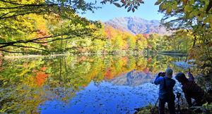 刈込池、水鏡彩る紅葉見ごろ