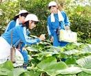 「植物の宝庫」 蒼島探検 加斗小児童 修学旅行…