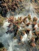 花粉の飛散量、例年より少なめか