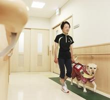 盲導犬「あいむ」と歩く女性。白杖を使うよりも不安が少なく、さっそうと動けるという=福井県福井市内