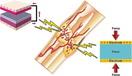 骨の圧電特性を応用し骨再生を促進する