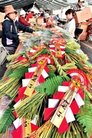 最盛期を迎えている正月用のしめ縄飾り作り=4日、福井県越前町織田の山崎農園