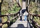 池田の名所「かずら橋」再開