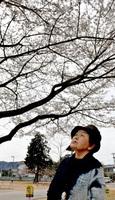 福井県越前市味真野小に植樹された荘川桜を見上げる宮川久子さん=同市池泉町