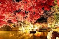 鯖江・西山公園 「インスタフォト審査」 「金色の庭園」が大賞 入賞作発表 14日から展示