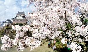桜の淡いピンク色が映える越前大野城=4月3日、福井県大野市城町の亀山公園