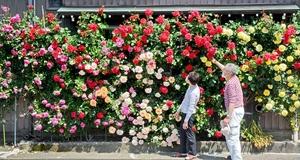 民家の外壁一面彩る癒やし…