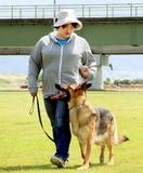 増える不明者、伸び悩む警察犬数