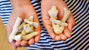 生前の女性が拾ったサンゴ(右)と、次女が拾ったサンゴ。両方とも遺影の前に供えられている
